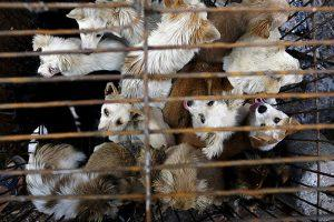 Eating of dogs and cats are banned in shenzhen city in China