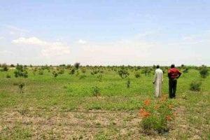Africa desertification