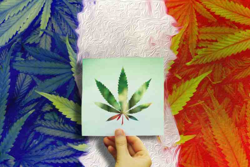 France Might Wish To Legalize Cannabis
