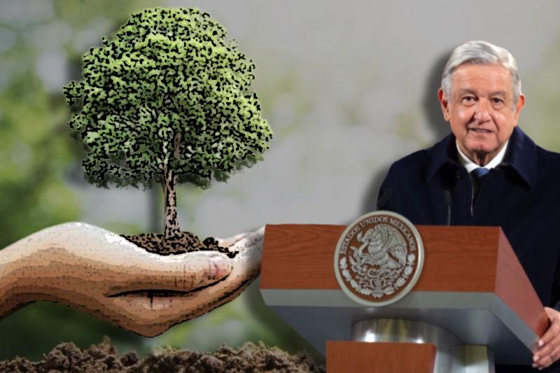 Mexico's Andrés Obrador propels the controversial reforestation program
