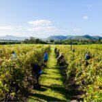 Will UK Business With Australia Hurts British Farmers?
