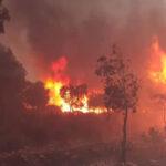 algerian wildfires
