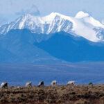 US alaska oil project